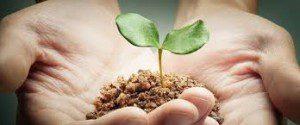 seedling in hand